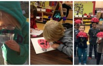 Ladybugs Through Children's Eyes – How Their Interests Inspire Our Curriculum