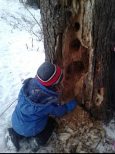 exploring a tree
