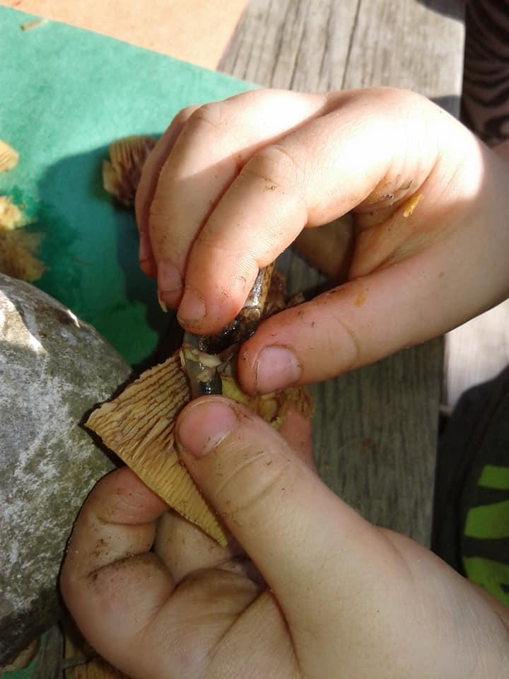 little fingers mushing mushroom